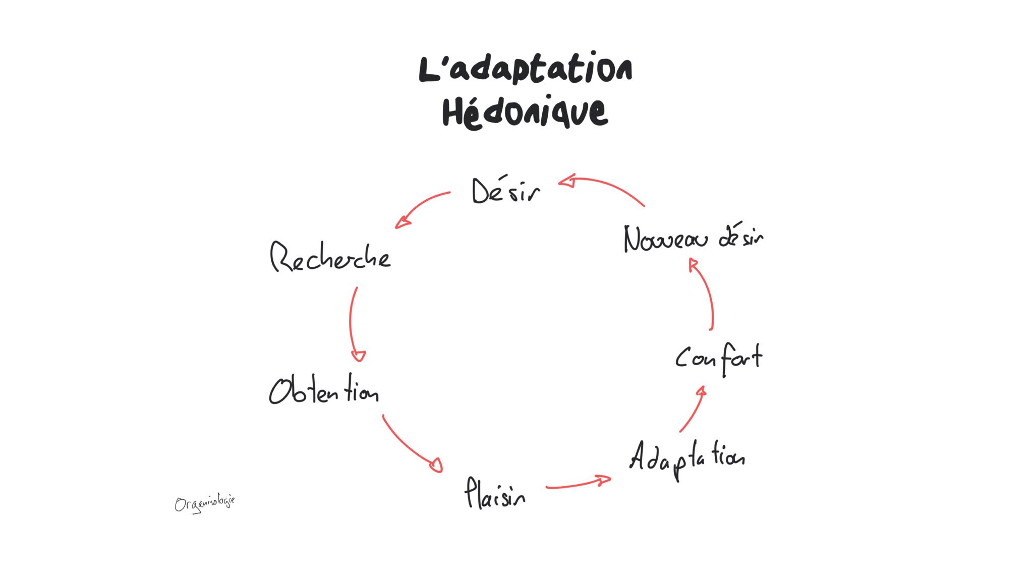 adaptation hédonique